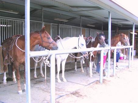 Horse Boarding & Stables, Horse Boarding Morongo Valley, CA